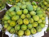 চাঁপাইনবাবগঞ্জের সু-মিষ্টি জাতীয় আম্রুপালী আম